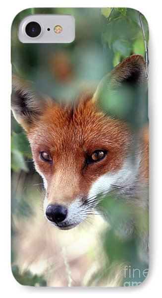 Fox Through Trees IPhone Case by Tim Gainey