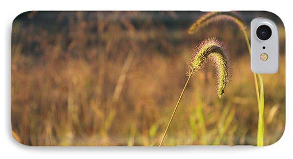 Foxtail Grass - Indian Summer Phone Case by Annette Gendler