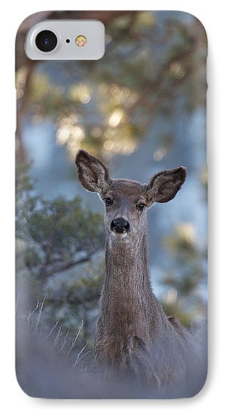 IPhone Case featuring the photograph Framed Deer Head And Shoulders by Duncan Selby