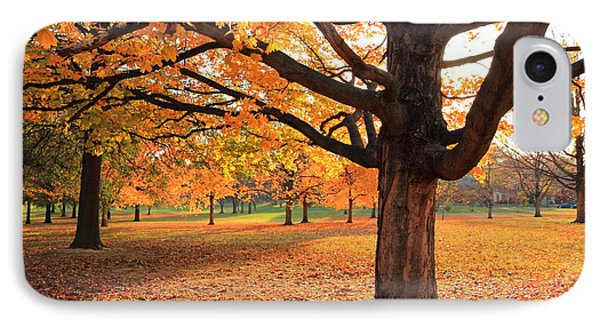 Francis Park Autumn Maple IPhone Case