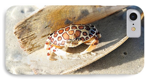 Frank The Spotted Crab Of Anna Maria IPhone Case by Margie Amberge