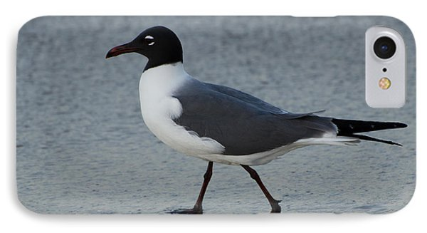 Franklins Gull IPhone Case