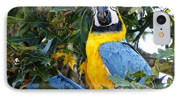 IPhone Case featuring the digital art Free Flying Macaws by Melissa Messick