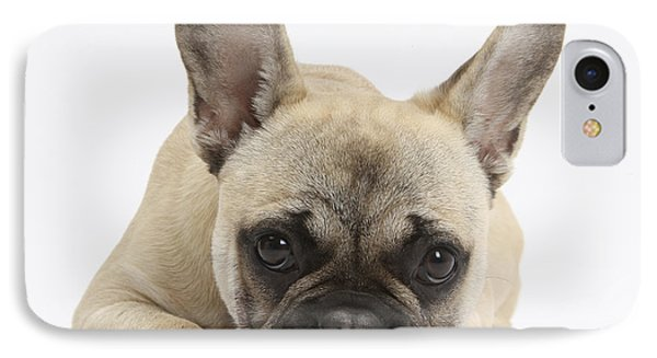 French Bulldog IPhone Case by Mark Taylor