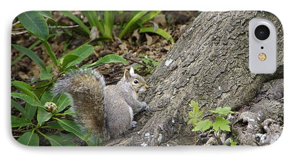 IPhone Case featuring the photograph Friendly Squirrel by Marilyn Wilson