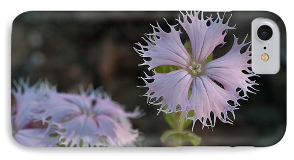 IPhone Case featuring the photograph Fringed Catchfly by Paul Rebmann