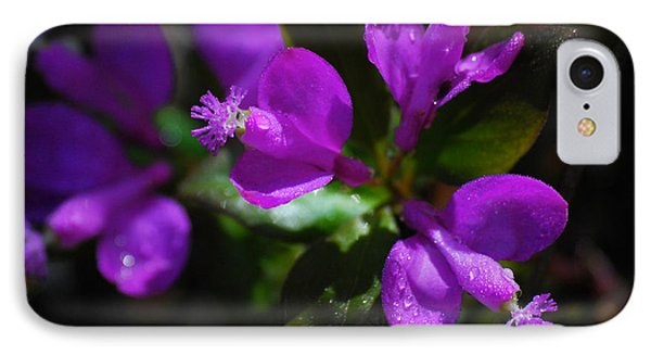 Fringed Polygala Phone Case by Christina Rollo