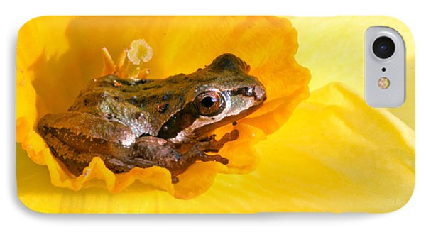 Frog And Daffodil IPhone Case by Jean Noren