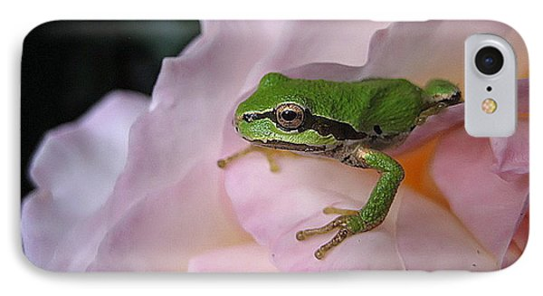 Frog And Rose Photo 3 IPhone Case by Cheryl Hoyle