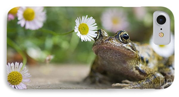 Frog And The Daisy  IPhone Case