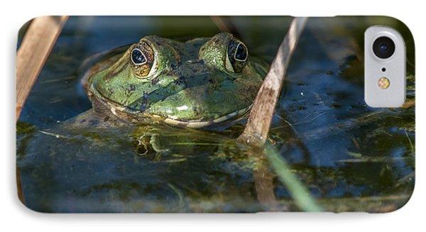 Frog Eyes IPhone Case