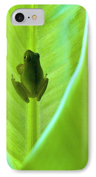 IPhone Case featuring the photograph Frog In Blankie by Faith Williams