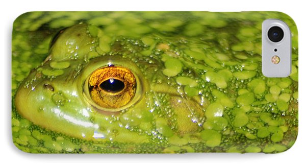 Frog In Single Celled Algae IPhone Case by Optical Playground By MP Ray