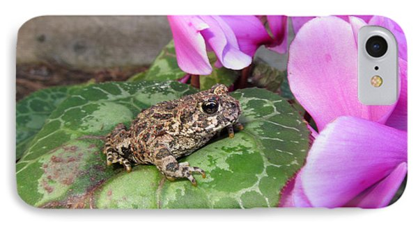 Frog On Cyclamen Plant IPhone Case by Debra Thompson