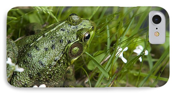 Frog On Water's Edge IPhone Case by Christina Rollo