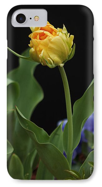 IPhone Case featuring the photograph Front Yard Tulip by Robert Pilkington