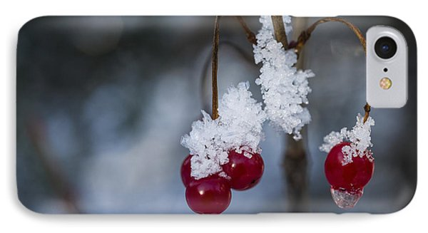 Frost Berries IPhone Case by Ted Raynor