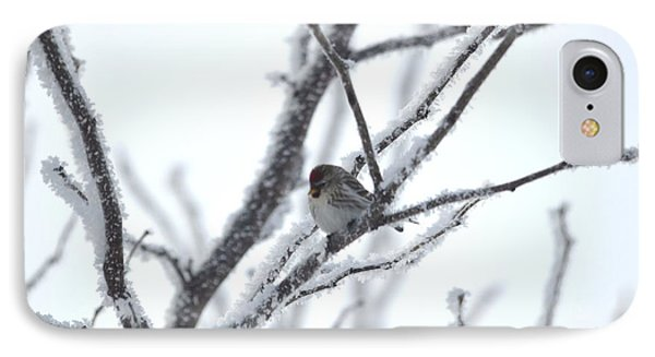 IPhone Case featuring the photograph Frosted Branches by Dacia Doroff