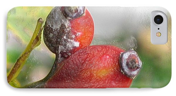 IPhone Case featuring the photograph Frosted Rosehips by Nina Silver