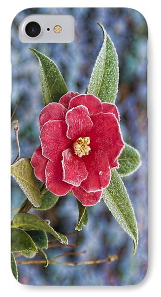 IPhone Case featuring the photograph Frosty Camellia - Phone Case Design by Gregory Scott