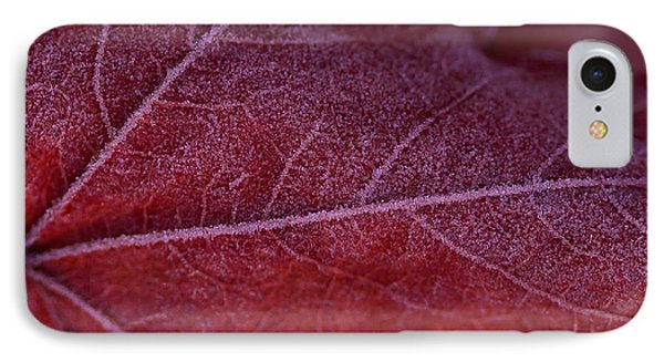 Frosty Leaf IPhone Case by Haren Images- Kriss Haren