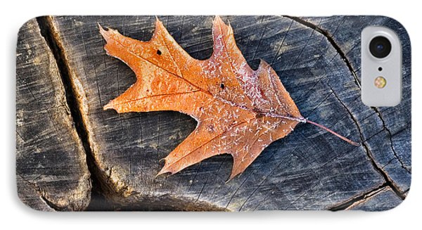 Frosty Leaf On Tree Trunk IPhone Case by Gary Slawsky