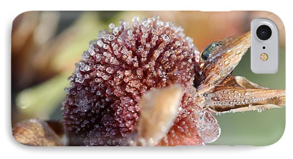 Frozen Dew Drops Melt From Canna Lily Seed Pods Phone Case by J McCombie