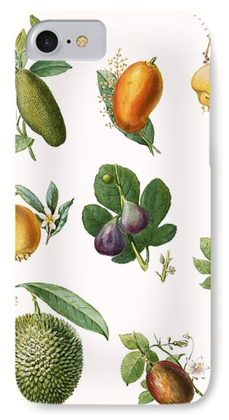 Fruit IPhone Case by English School