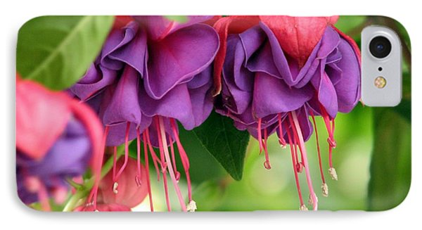 Fuchsias IPhone Case by Chris Anderson