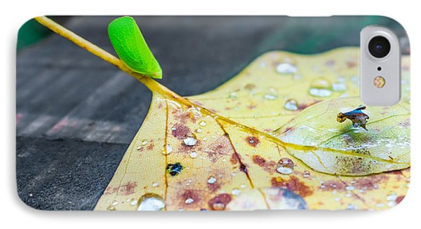 IPhone Case featuring the photograph Fulgoroidea On A Leaf by Rob Sellers