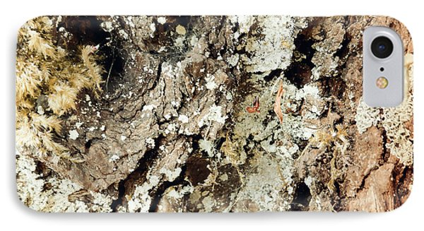 IPhone Case featuring the photograph Fungus Bark Vintage by Laurie Tsemak