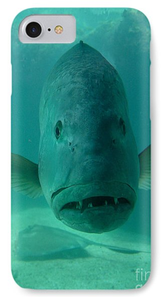 Funny Fish Face Phone Case by Amy Cicconi
