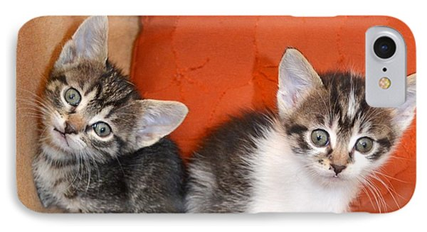 Funny Kittens IPhone Case