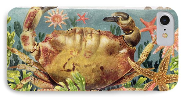 Furrowed Crab With Starfish Underwater Phone Case by EB Watts