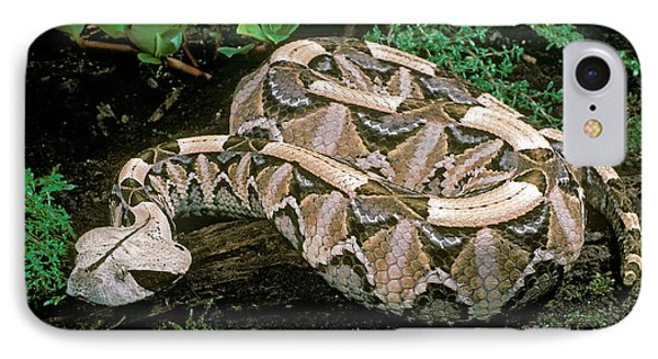 Gaboon Viper IPhone Case