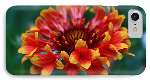 IPhone Case featuring the photograph Gaillardia Flower by Keith Hawley