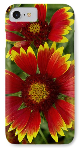 IPhone Case featuring the photograph Gaillardia / Flowers by James C Thomas