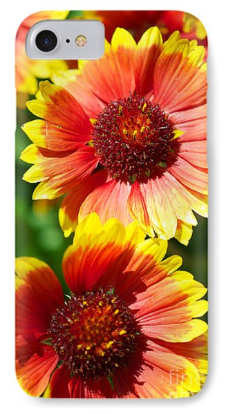 IPhone Case featuring the photograph Gaillardia2x by Vinnie Oakes