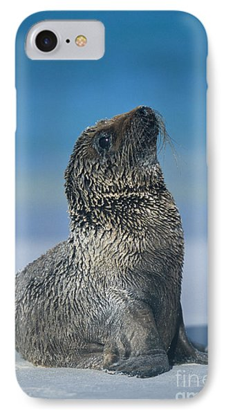 IPhone Case featuring the photograph Galapagos Sea Lion by Chris Scroggins