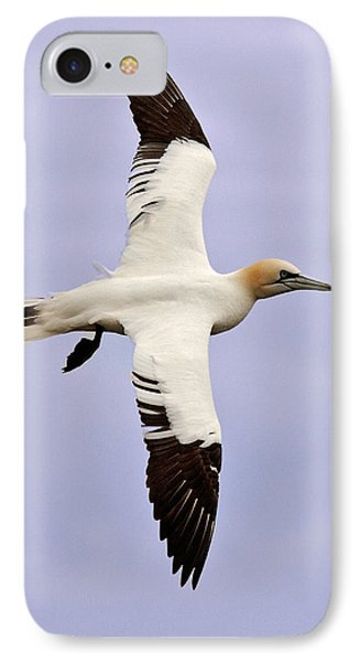IPhone Case featuring the photograph Gannet . by Paul Scoullar
