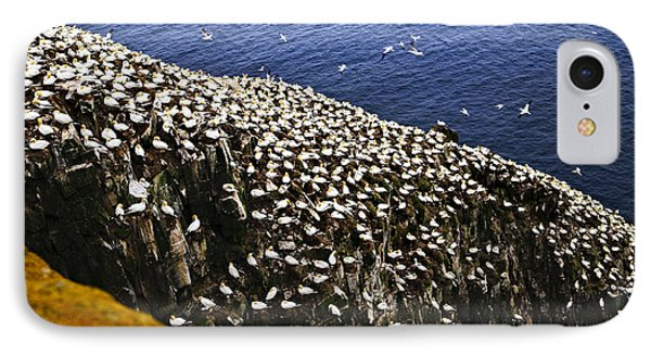 Gannets At Cape St. Mary's Ecological Bird Sanctuary IPhone Case