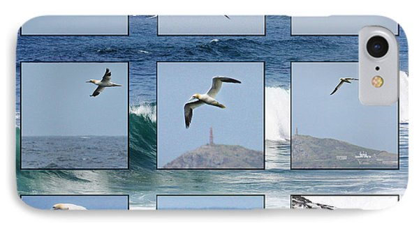 Gannets Galore IPhone Case by Terri Waters