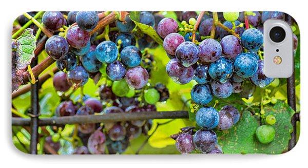 Garden Grapes IPhone Case