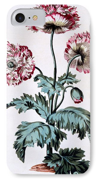 Garden Poppy With Black Seeds IPhone Case by John Edwards