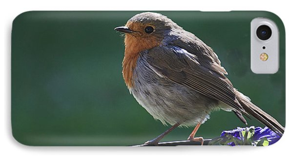 Garden Robin IPhone Case by Shirley Mitchell