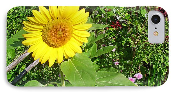 Garden Sunflower Phone Case by Aimee L Maher Photography and Art Visit ALMGallerydotcom