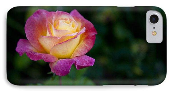 Garden Tea Rose IPhone Case by David Millenheft