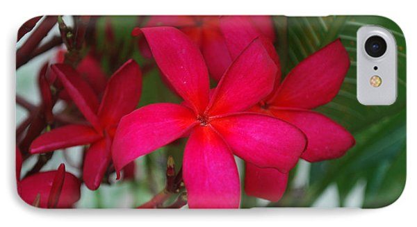 IPhone Case featuring the photograph Garden Treasures by Miguel Winterpacht