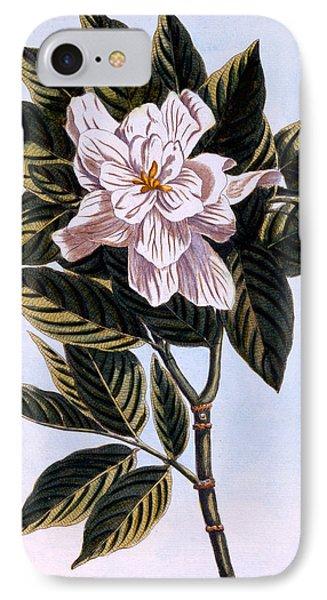 Gardenia G Augusta IPhone Case
