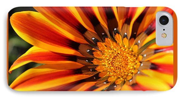 IPhone Case featuring the photograph Gazania Glory by Richard Stephen